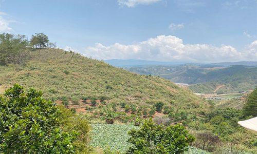 Bán 5 mẫu đất nông nghiệp dưới chân đỉnh LangBiang có sổ đỏ