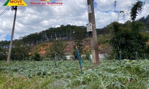 Bán 2,4 mẫu đất nông nghiệp xã Đạ Sar, Lâm Đồng có sổ đỏ